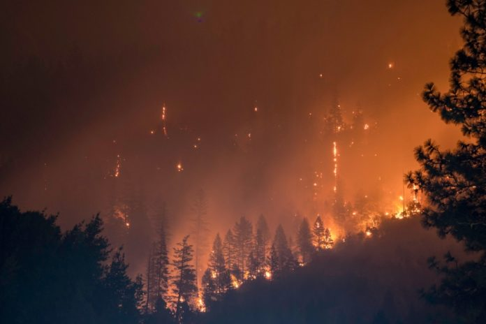 burning forest, fire and flames among trees
